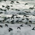 FlockofBirds