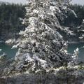 snow! 006