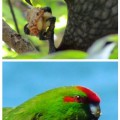 NZbirds