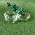 final butterfly