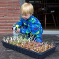 jamisen gardening