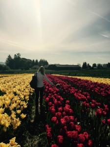 Tulips in Mt Vernon