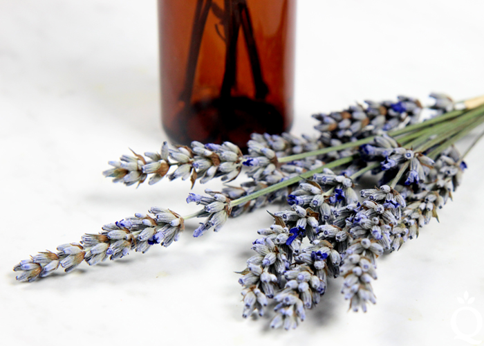 https://www.soapqueen.com/wp-content/uploads/2017/07/Lavender-History.jpg