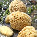 SeaSponges1_700px